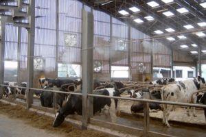 Quạt hút mùi chuồng trại- Quạt thông gió công nghiệp cho trại chăn nuôi